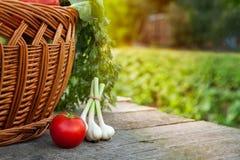 Tabela do tomate e da cebola no jardim Imagem de Stock Royalty Free