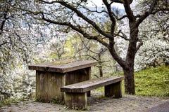Tabela e banco de madeira velhos no pomar Fotografia de Stock