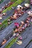 Tabela Mossy Foto de Stock Royalty Free