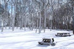Tabelas cobertos de neve das árvores e de piquenique foto de stock