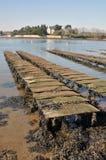 Tabelas da ostra em Brittany fotografia de stock royalty free