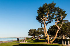 Tabelas de Coral Trees e de piquenique no parque de Chula Vista Bayfront Fotografia de Stock