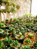 Tabell av kaktuskrukor royaltyfria foton