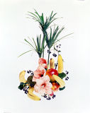 tabell för 5 blommor royaltyfria bilder