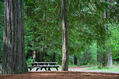 tabell för skogpicknickredwoodträd Royaltyfri Bild