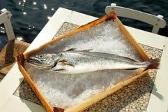 tabell för torskfiskis arkivbild