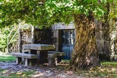 Tabell under ett kastanjebrunt träd Royaltyfria Bilder