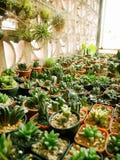 Tabella dei vasi del cactus Fotografie Stock Libere da Diritti