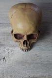 Tabella di legno del OM del cranio umano Fotografie Stock Libere da Diritti