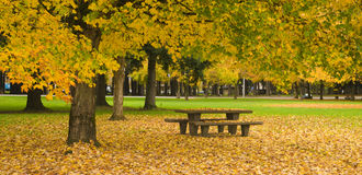 Tabella di picnic di area di riposo Autumn Nature Season Leaves Falling immagine stock libera da diritti