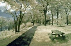 Tabella di picnic nella sosta Fotografia Stock