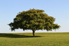 Tabella di picnic sotto un albero Immagini Stock