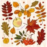 tabella variopinta della zucca dell'accumulazione di autunno Fotografia Stock Libera da Diritti
