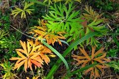 tabella variopinta della zucca dell'accumulazione di autunno Erba scolpita della foresta delle foglie tessuto Fotografia Stock