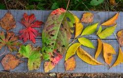 tabella variopinta della zucca dell'accumulazione di autunno Foglie di autunno differenti che si trovano su una superficie di leg Fotografia Stock