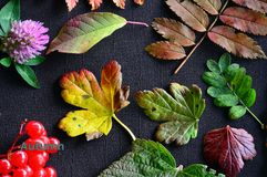 tabella variopinta della zucca dell'accumulazione di autunno L'autunno ha colorato le foglie su un fondo scuro Fotografia Stock Libera da Diritti