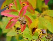 tabella variopinta della zucca dell'accumulazione di autunno Semi dell'erba con le foglie rosso verdi Fotografia Stock
