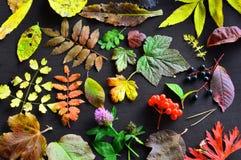 tabella variopinta della zucca dell'accumulazione di autunno Un modello delle foglie di autunno degli alberi e delle erbe differe Immagini Stock