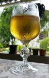 Tabelle mit einem Glas Weißwein Stockfotografie