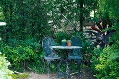 Tabelle mit Kaktus im Garten stockfotografie