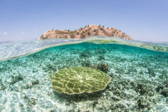 Tabellen-Koralle und Insel Stockbilder