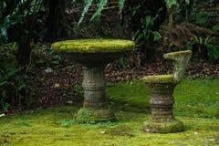 Tabellen och stolen täckas med naturlig mossa Naturlig mossa på möblemang arkivbilder