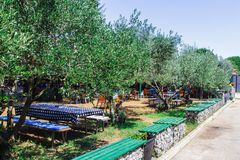 Tabellen und Stühle, Holzbanken unter den Bäumen entlang der Straße kroatien lizenzfreie stockfotografie