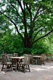 Tabellen unter großem Baum Stockfotografie