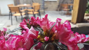 Tabellenblumen Stockbild