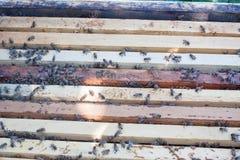 Tablón con el panal en la colmena El arrastre de las abejas a lo largo de la colmena Fotografía de archivo libre de regalías
