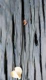Tablón de madera mojado de la tabla con el fondo secado de las hojas Imagenes de archivo