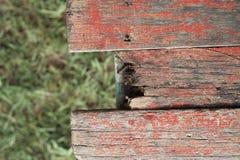 Tablón de madera viejo con el fondo de la hierba verde de la falta de definición Fotos de archivo libres de regalías