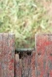 Tablón de madera viejo con el fondo de la hierba verde de la falta de definición Imagenes de archivo