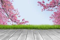 Tablón de madera y fondo rosado de la rama de la flor de cerezo fotos de archivo