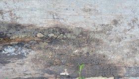 Tablón y cemento de madera del fondo Fotos de archivo