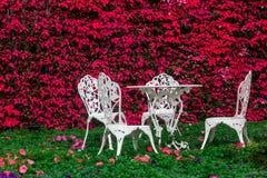 Tabla blanca del hierro en el jardín de flores con el árbol del pulcherrima del euforbio en el fondo Fotografía de archivo libre de regalías
