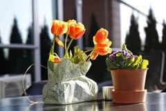 Tabla con las flores de la primavera Imagenes de archivo