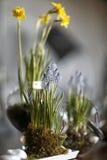 Tabla con las flores de la primavera Imagen de archivo libre de regalías