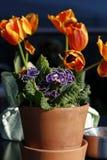 Tabla con las flores de la primavera Fotografía de archivo