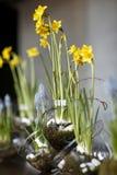 Tabla con las flores de la primavera Fotos de archivo libres de regalías