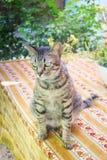 Tabla de Cat Chilling Out On Dinner foto de archivo libre de regalías