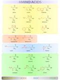 Tabla de los aminoácidos Fotografía de archivo