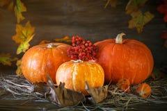 Tabla de madera adornada con las calabazas y las hojas de otoño Fondo del otoño Fondo feliz del día de la acción de gracias Foto de archivo