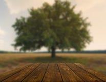 Tabla de madera al aire libre con el fondo del campo del otoño Imagenes de archivo