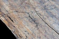 Tabla de madera con la hormiga Imagen de archivo libre de regalías