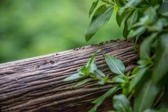 Tabla de madera con la hormiga Imagenes de archivo