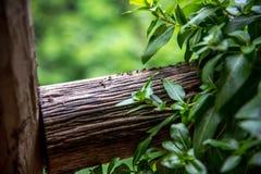 Tabla de madera con la hormiga Fotografía de archivo libre de regalías