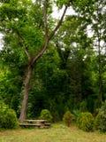 Tabla de madera debajo de un árbol en el bosque Imagen de archivo