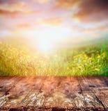 Tabla de madera rústica sobre el campo y el cielo amarillos de la puesta del sol, naturaleza del diente de león Imagen de archivo