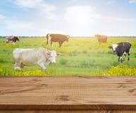 Tabla de madera sobre fondo defocused con las vacas y el prado de la hierba Imagen de archivo
